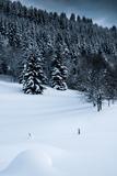 Alpine Flurry Photographic Print by Craig Howarth