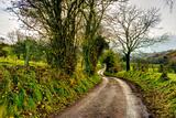 Going Home Fotografisk trykk av Mark Gemmell