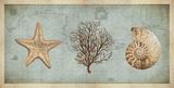 Sea Treasures II Prints by Deborah Devellier