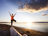 Tree Pose During Sunset on the Beach of Lincoln Park, West Seattle, Washington Photographic Print by Dan Holz
