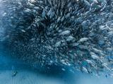 A School of Fish over a Diver, Baja California. Fotografie-Druck von Christian Vizl