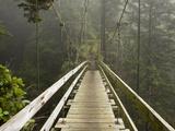 West Coast Trail - Day 3 Reproduction photographique par Sergio Ballivian