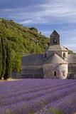 Rows of Lavender, Abbaye De Senanque, Gordes, Luberon, Provence, France Fotografisk trykk av Brian Jannsen
