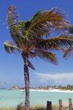 Palm Tree of Castaway Cay, Bahamas, Caribbean Reproduction photographique par Kymri Wilt