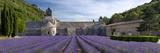 Rows of Lavender, Abbaye De Senanque Near Gordes, Luberon, Provence, France Premium fototryk af Brian Jannsen
