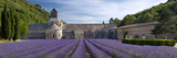 Rows of Lavender, Abbaye De Senanque Near Gordes, Luberon, Provence, France Photographic Print by Brian Jannsen
