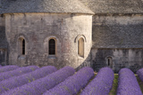 Rows of Lavender, Abbaye De Senanque, Gordes, Luberon, Provence, France Lámina fotográfica por Brian Jannsen