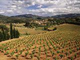 View of Corbieres Vineyard, Darban-Corbieres, Aude, Languedoc, France Reproduction photographique par David Barnes