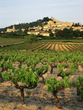 View of Provence Vineyard, Luberon, Bonnieux, Vaucluse, France Reproduction photographique par David Barnes