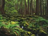 Rainforest, Mossy Rocks, Mt Rainier National Park, Washington, USA Reproduction photographique par Stuart Westmorland