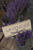 Farm Sign with Dried Lavender for Sale at Lavender Festival, Sequim, Washington, USA Photographic Print by John & Lisa Merrill