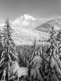 Winter Frost Trees on Mt. Hood, Mt Hood National Forest, Oregon, USA Reproduction photographique par Stuart Westmorland
