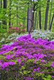 Winterthur Gardens, Delaware, USA Reproduction photographique