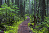 Hiking Path Winds Through Mossy Rainforest in Glacier National Park, Montana, USA Photographic Print by Chuck Haney