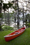 Canoe, Texas's Largest Natural Lake at Sunrise, Caddo Lake, Texas, USA Reproduction photographique par Larry Ditto