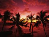 View Palm Trees on Beach, Big Islands, Kona, Hawaii, USA Reproduction photographique par Stuart Westmorland