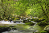 Cascading Creek, Great Smoky Mountains National Park, Tennessee, USA Reproduction photographique