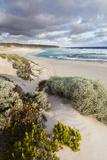 Beach, Hanson Bay, Kangaroo Island, Australia Fotografisk trykk av Martin Zwick