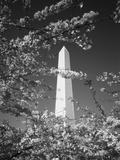 Monument with Cherry Blossom in Foreground, Washington DC, USA Fotografie-Druck von Scott T. Smith