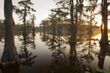 Caddo Lake, Texas, USA Reproduction photographique par Larry Ditto