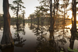 Caddo Lake, Texas, USA Photographic Print by Larry Ditto