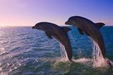 Dolphins Leaping from Sea, Roatan Island, Honduras Fotografie-Druck von Keren Su