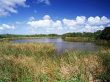 View of Eco Pond, Everglades National Park, Florida, USA Fotografisk trykk av Adam Jones