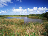 View of Eco Pond, Everglades National Park, Florida, USA Fotografie-Druck von Adam Jones