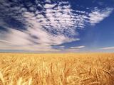 Clouds over Wheat Field Agriculture Reproduction photographique par Stuart Westmorland