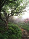 Craggy Gardens, Pisgah National Forest, North Carolina, USA Fotografie-Druck von Adam Jones