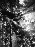 Sunbeam Passing Through Trees, Olympic National Park, Washington State, USA Fotografie-Druck von Adam Jones
