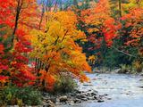 Rivière dans les bois en automne Posters