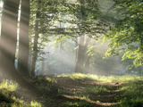 Chemin dans la forêt Poster