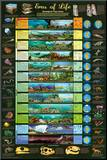 Eras of Life Geology Educational Science Chart Poster Impressão montada