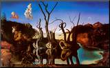 Cigni che riflettono elefanti, 1937 circa Stampa montata di Salvador Dalí