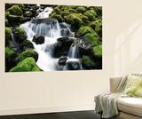 Creek Near Sol Duc Falls, Olympic National Park, Washington State, USA Posters par Stuart Westmorland
