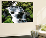 Creek Near Sol Duc Falls, Olympic National Park, Washington State, USA ポスター : スチュアート・ウエストモアランド