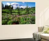 Subalpine Meadow, Mount Rainier National Park, Washington, USA 高品質プリント : アダム・ジョーンズ