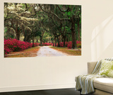 Road Lined with Azaleas and Live Oaks, Spanish Moss, Savannah, Georgia, USA Plakater af Adam Jones