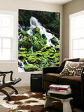 View of Mossy Umpqua National Forest, Oregon, USA Plakater af Stuart Westmorland