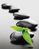 Zen Stones - Green Prints