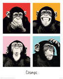 The Chimp - Pop Photo