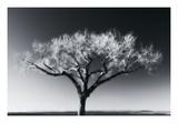 Glowing Tree Premium fotoprint van Jamie Cook