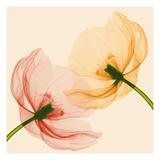 Lightness I Premium fotoprint van Val Andre