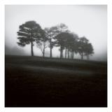 Fog Tree Study 2 Premium fotoprint van Jamie Cook