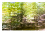 Forest Abstract 5 プレミアム写真プリント : ポール・エロモンドソン