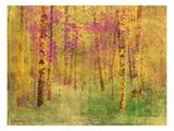 Spring Birch Trees Premium Giclee Print by  GI ArtLab