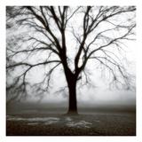 Fog Tree Study 3 Premium fotoprint van Jamie Cook