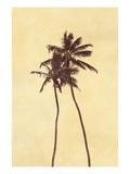 Palm Vista I Premium fototryk af Thea Schrack