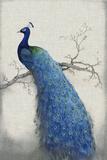 Peacock Blue II アート : ティム ・オトゥール